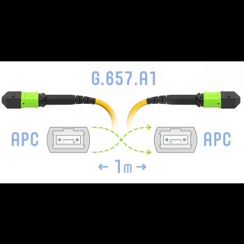 Патчкорд оптический MPO/APC FF SM G.657.A1, 12 волокон, 1 метр (Cross)